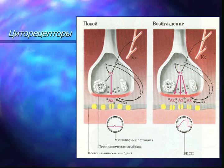 Циторецепторы