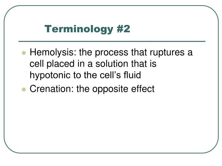 Terminology #2