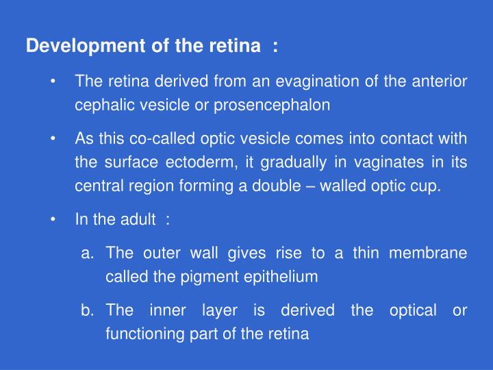 Development of the retina  :