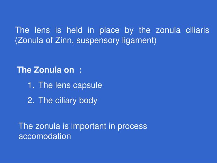 The lens is held in place by the zonula ciliaris (Zonula of Zinn, suspensory ligament)