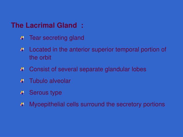 The Lacrimal Gland  :