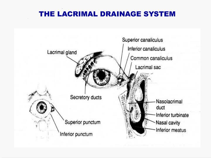 THE LACRIMAL DRAINAGE SYSTEM