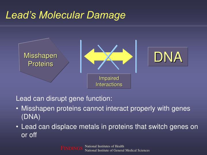 Lead's Molecular Damage