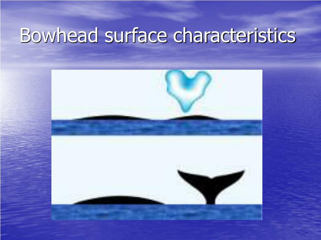 Bowhead surface characteristics