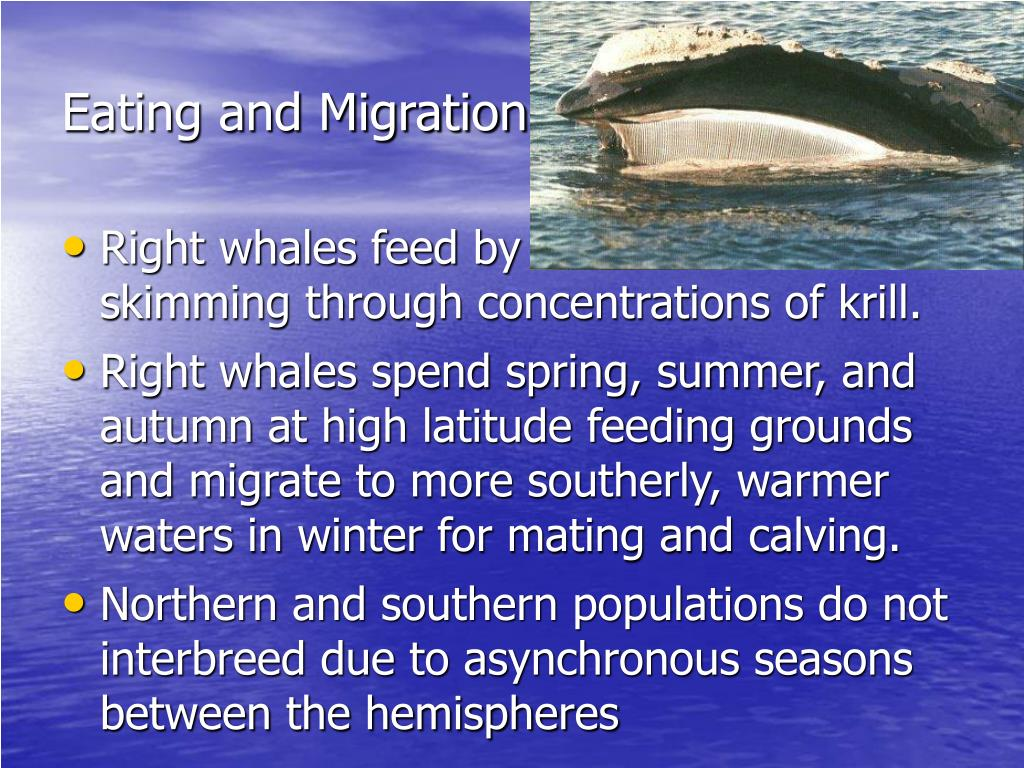 Eating and Migration