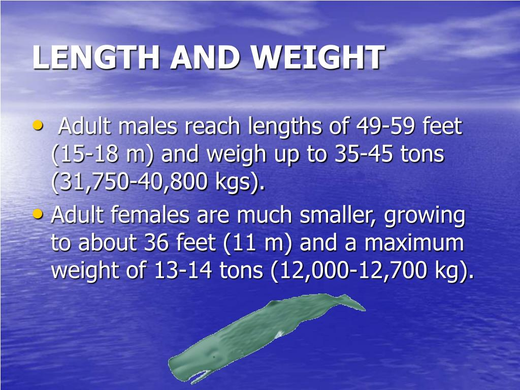 LENGTH AND WEIGHT