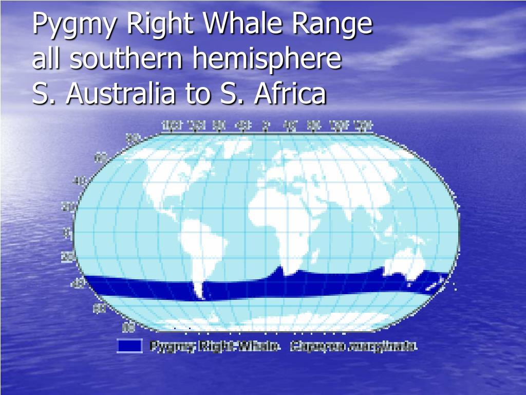Pygmy Right Whale Range