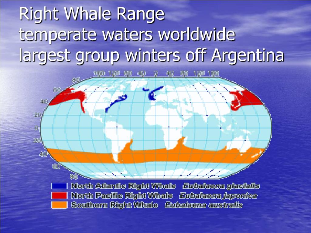 Right Whale Range
