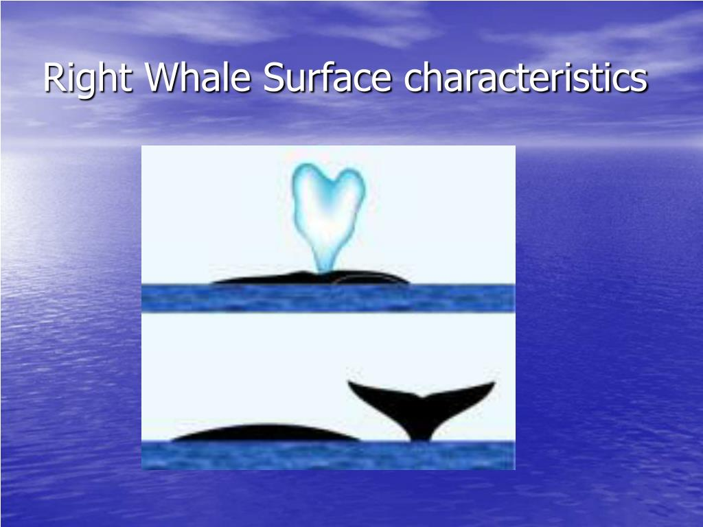 Right Whale Surface characteristics
