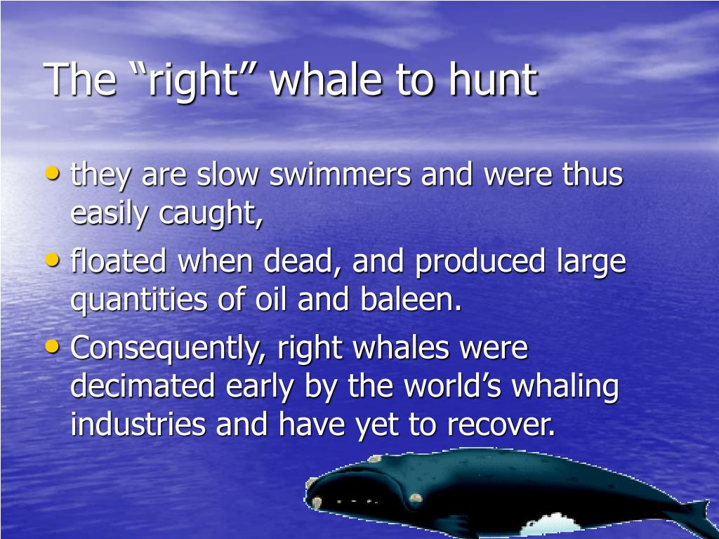 """The """"right"""" whale to hunt"""