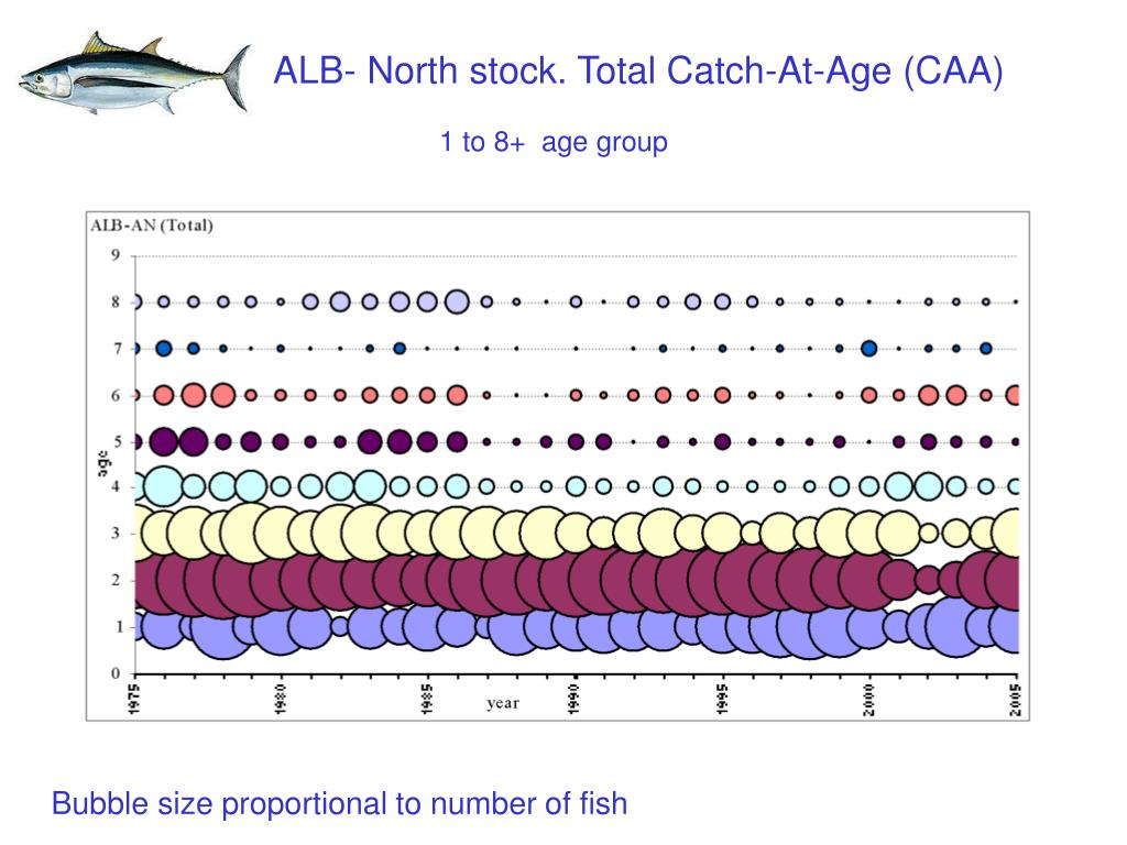 ALB- North stock. Total Catch-At-Age (CAA)