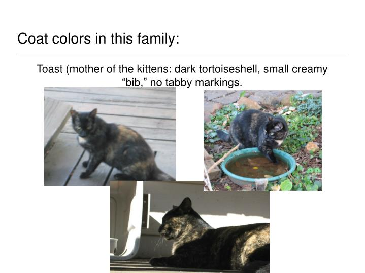 Coat colors in this family: