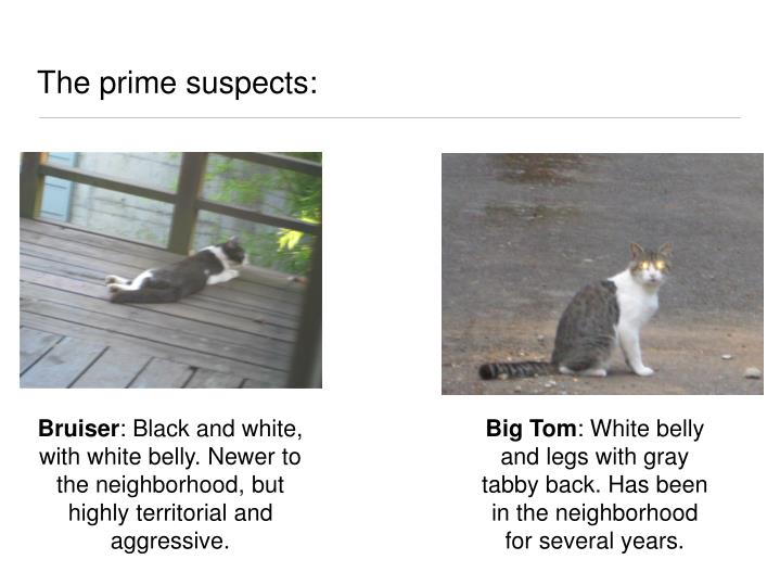 The prime suspects: