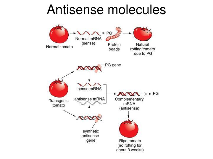 Antisense molecules