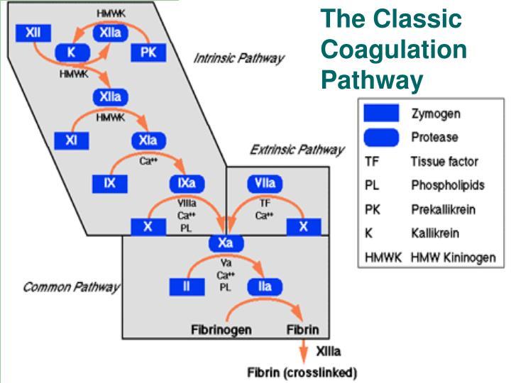 The Classic Coagulation Pathway