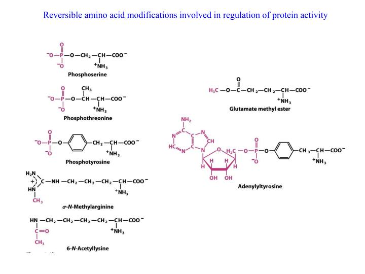 Reversible amino acid modifications involved in regulation of protein activity