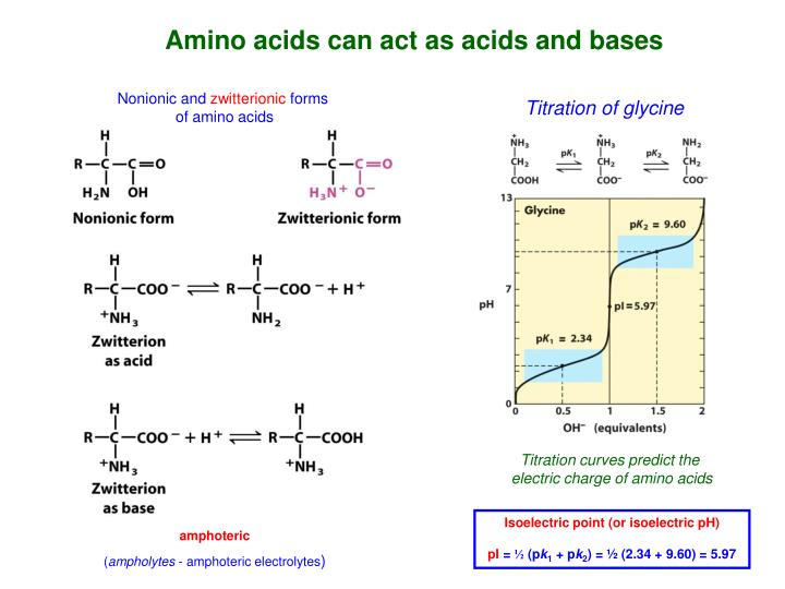 Amino acids can act as acids and bases