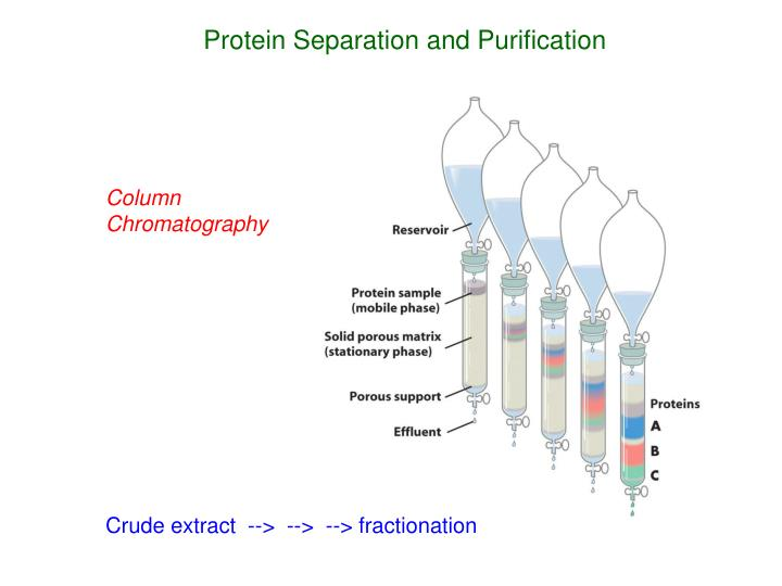 Protein Separation and Purification