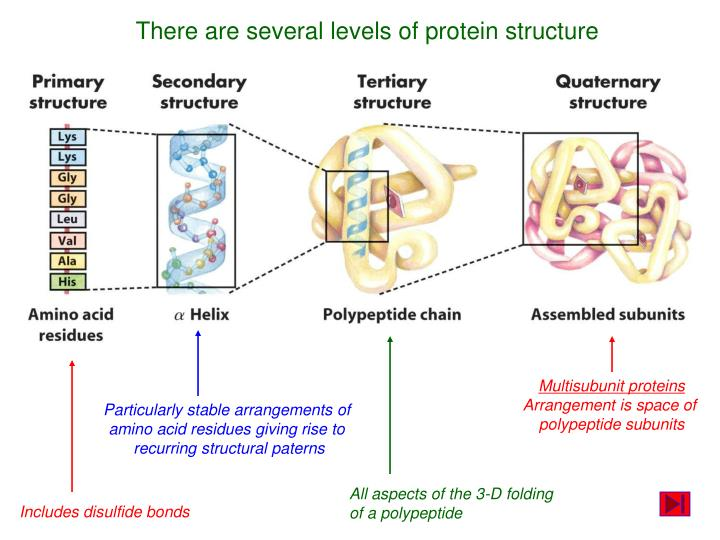 There are several levels of protein structure