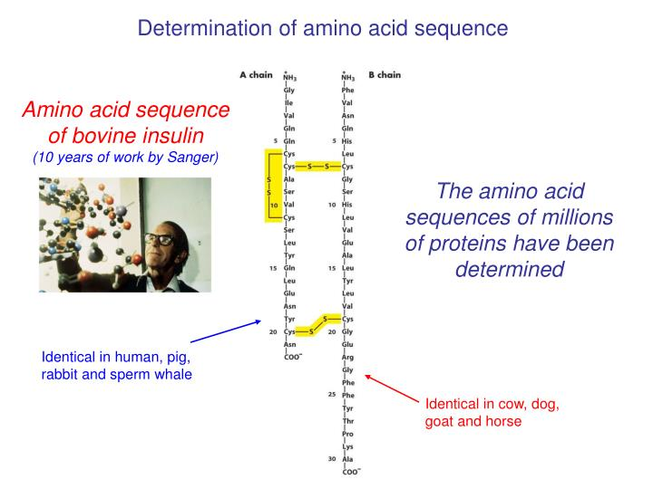 Determination of amino acid sequence
