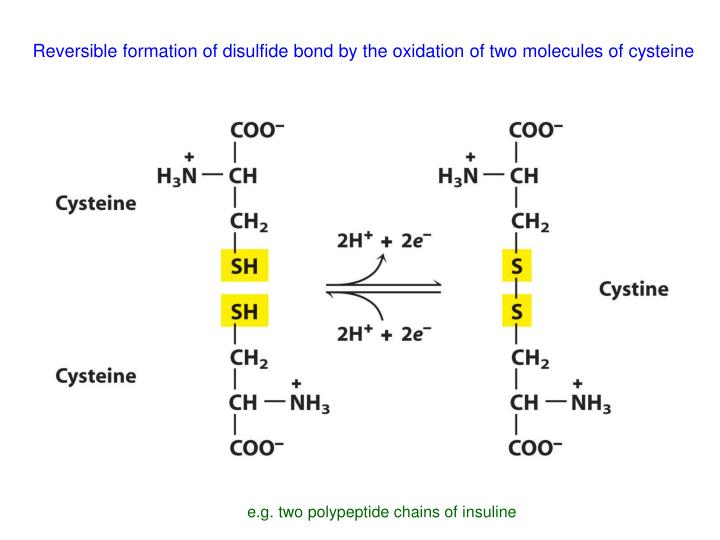 Reversible formation of disulfide bond by the oxidation of two molecules of cysteine