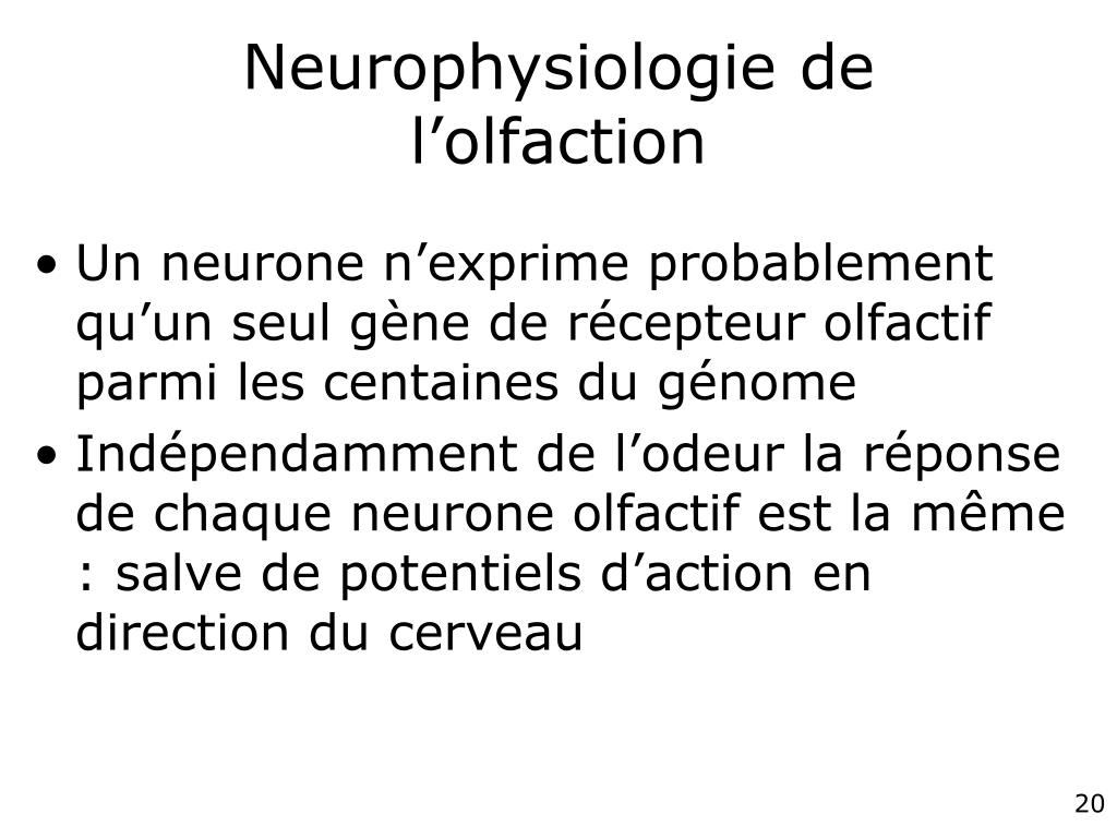 Neurophysiologie de l'olfaction