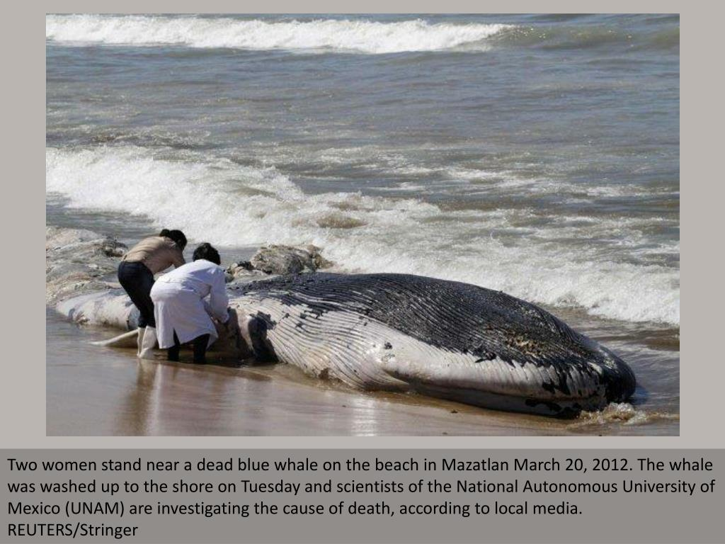 Two women stand near a dead blue whale on the beach in Mazatlan March 20, 2012. The whale was washed up to the shore on Tuesday and scientists of the National Autonomous University of Mexico (UNAM) are investigating the cause of death, according to local media. REUTERS/Stringer
