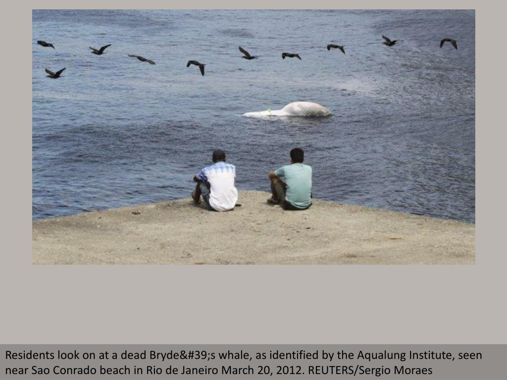 Residents look on at a dead Bryde's whale, as identified by the Aqualung Institute, seen near Sao Conrado beach in Rio de Janeiro March 20, 2012. REUTERS/Sergio Moraes