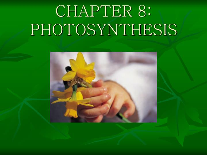 Chapter 8 photosynthesis l.jpg
