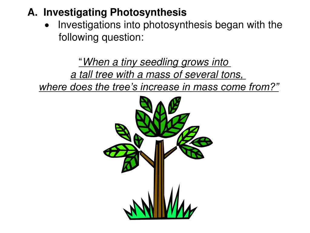 A.  Investigating Photosynthesis