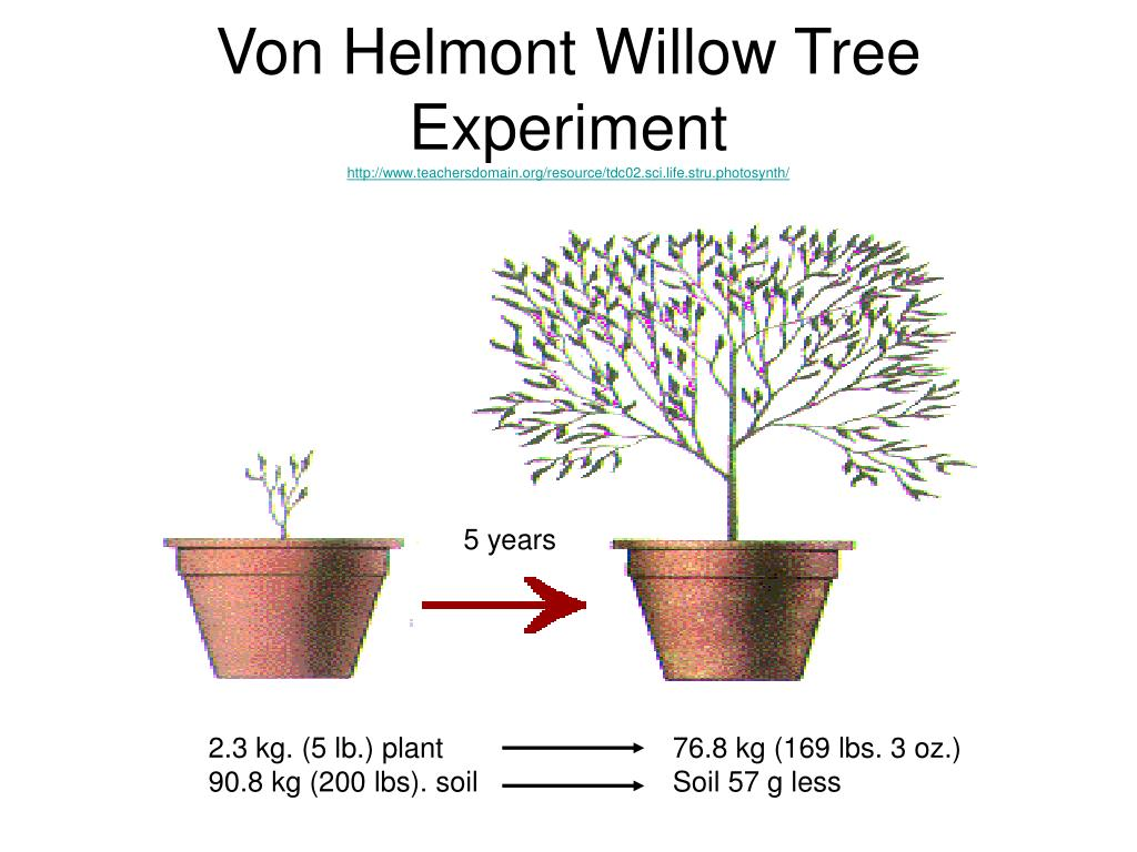 Von Helmont Willow Tree Experiment