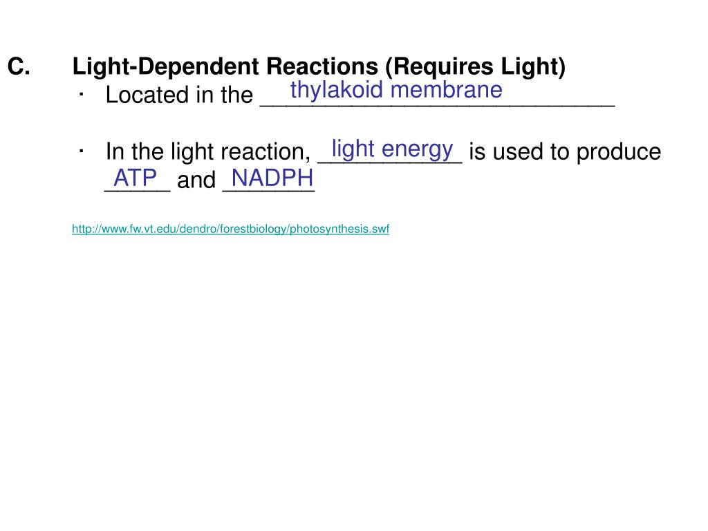 Light-Dependent Reactions (Requires Light)