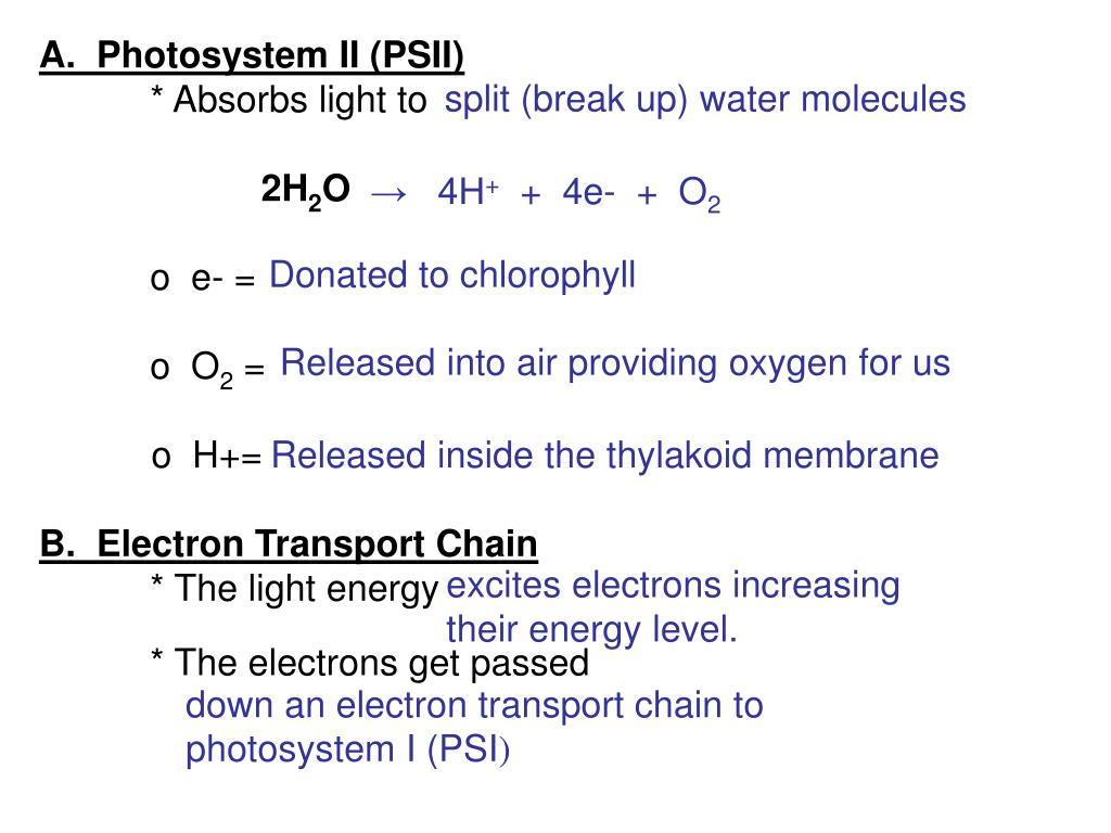 A.  Photosystem II (PSII)