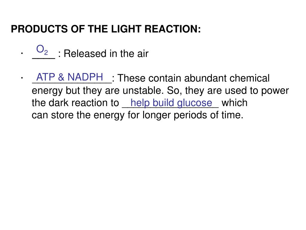 PRODUCTS OF THE LIGHT REACTION: