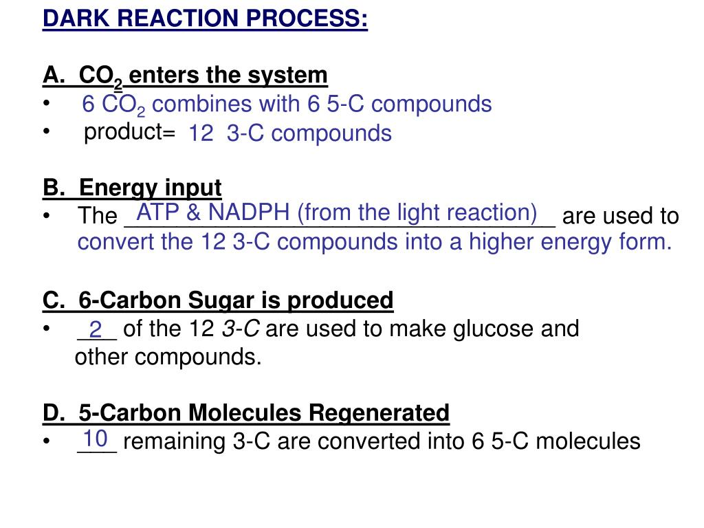 DARK REACTION PROCESS: