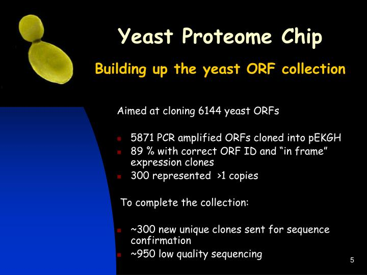 Yeast Proteome Chip