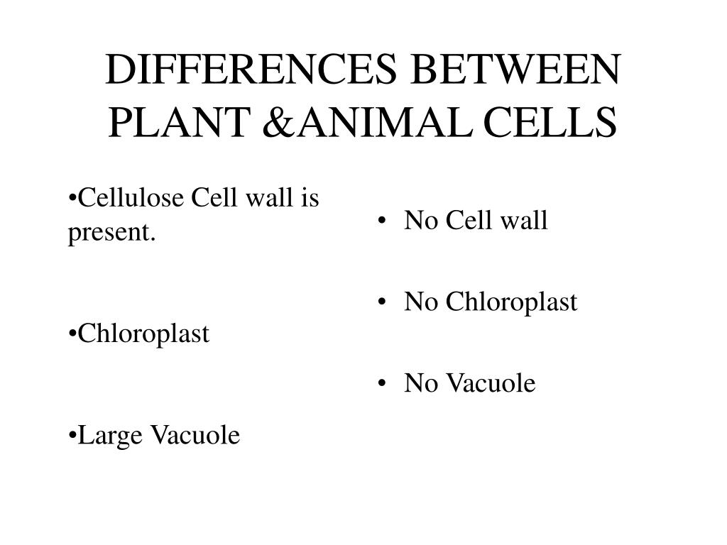 DIFFERENCES BETWEEN PLANT &ANIMAL CELLS
