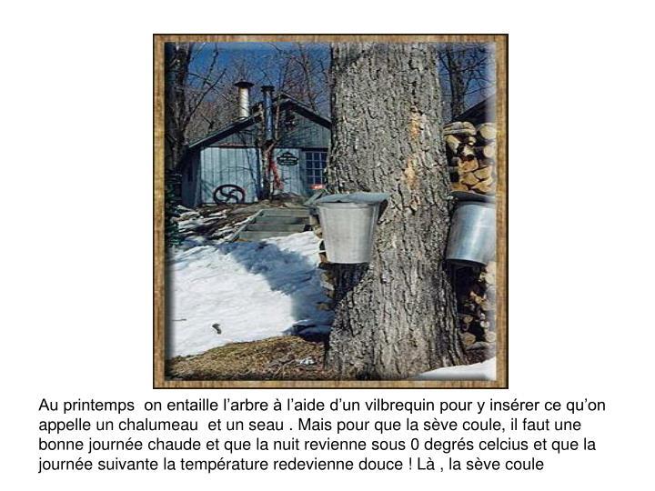 Au printemps  on entaille l'arbre à l'aide d'un vilbrequin pour y insérer ce qu'on