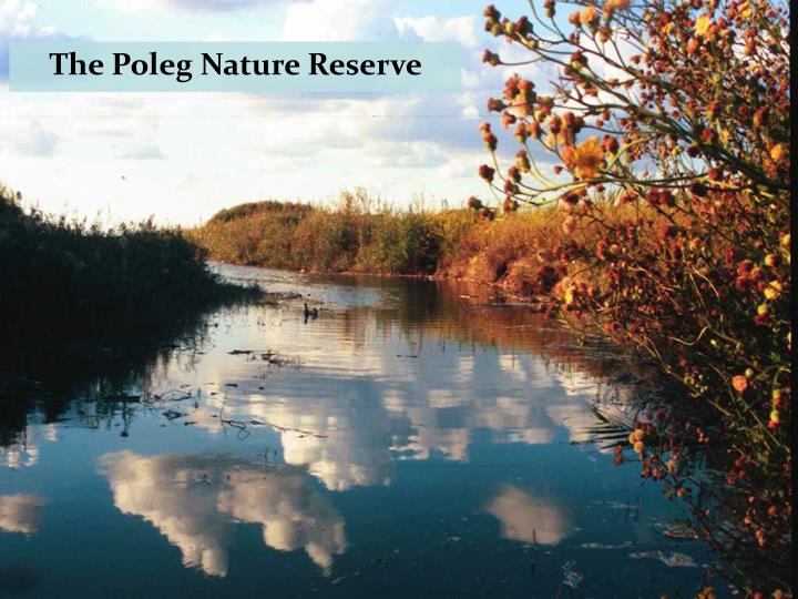 The Poleg Nature Reserve
