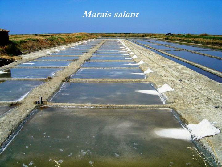 Marais salant