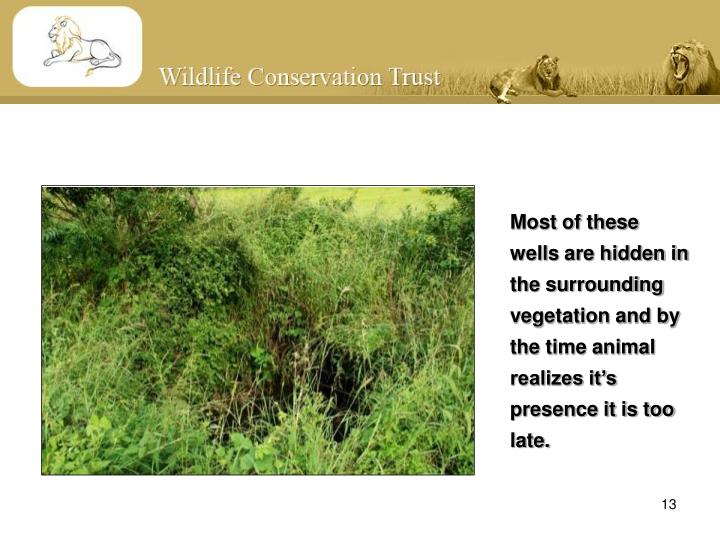 Most of these wells are hidden in the surrounding vegetation and by the time animal realizes it's presence it is too late.
