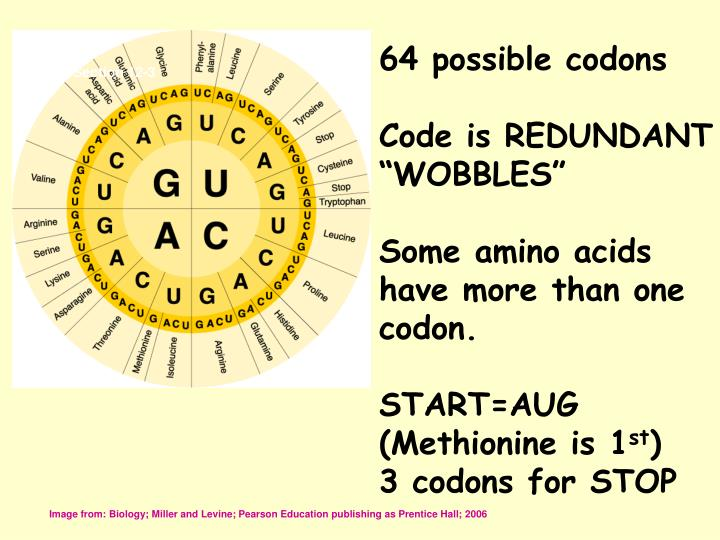 64 possible codons