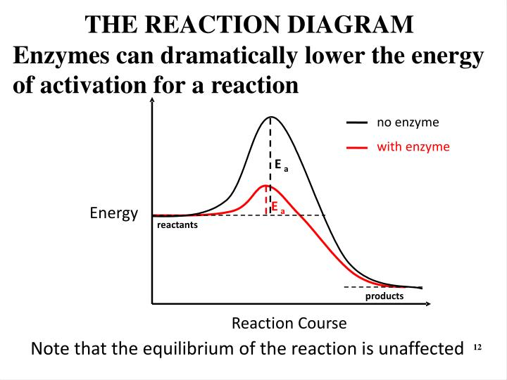 THE REACTION DIAGRAM