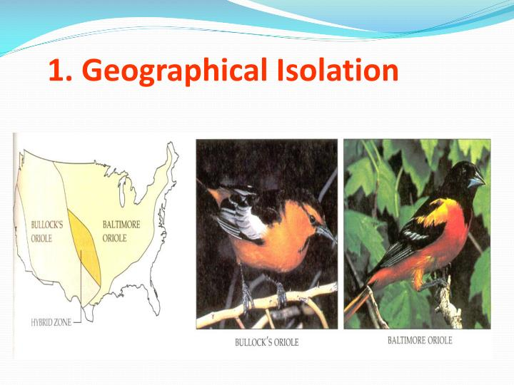 1. Geographical Isolation