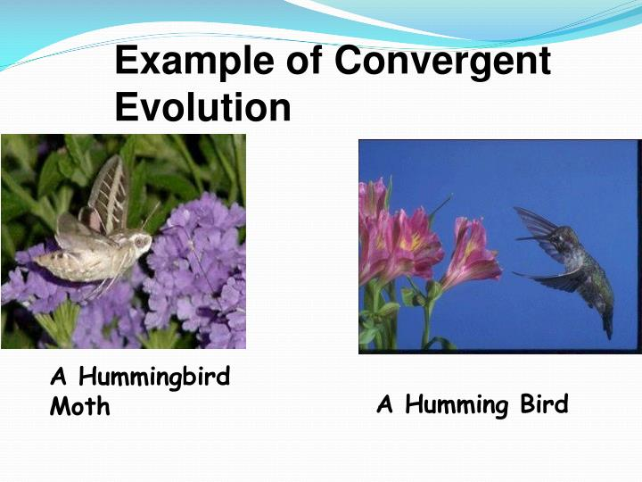 Example of Convergent