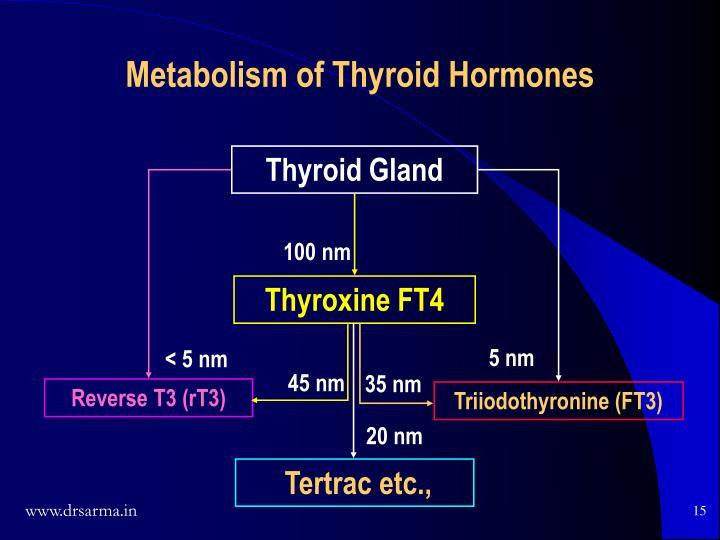 Metabolism of Thyroid Hormones