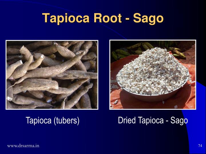 Tapioca Root - Sago