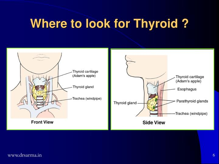 Where to look for Thyroid ?