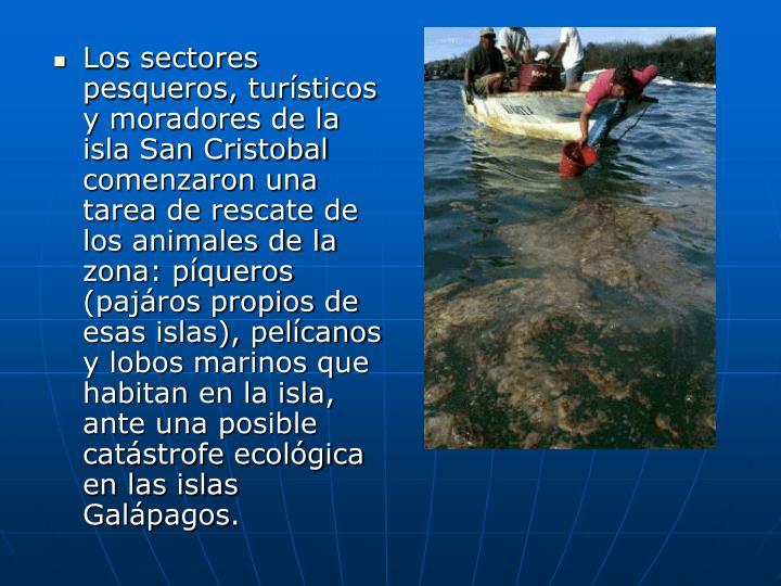 Los sectores pesqueros, tursticos y moradores de la isla San Cristobal comenzaron una tarea de rescate de los animales de la zona: pqueros (pajros propios de esas islas), pelcanos y lobos marinos que habitan en la isla, ante una posible catstrofe ecolgica en las islas Galpagos
