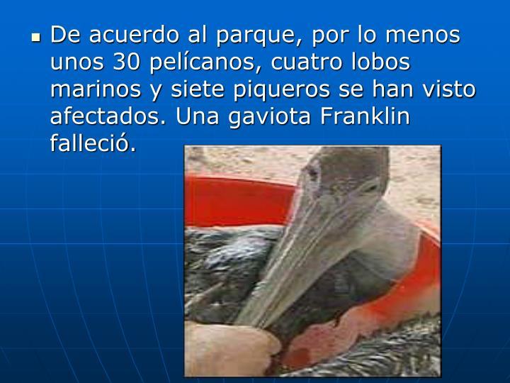 De acuerdo al parque, por lo menos unos 30 pelcanos, cuatro lobos marinos y siete piqueros se han visto afectados. Una gaviota Franklin falleci
